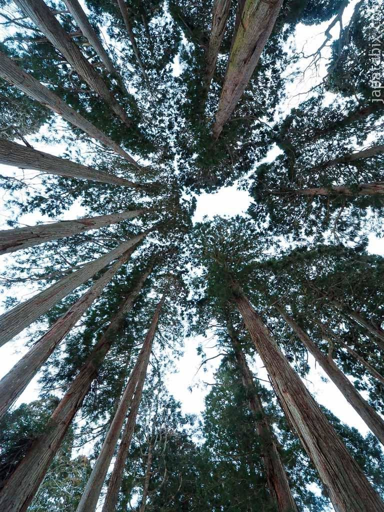 長野 戸隠神社 奥社 杉並木
