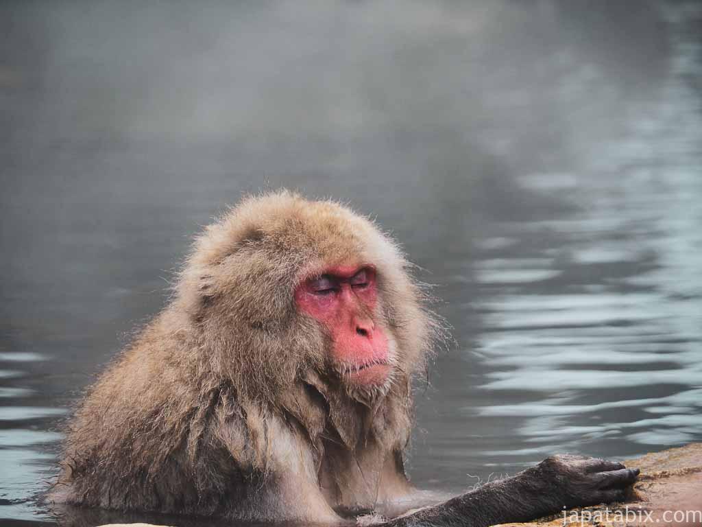 長野 地獄谷野猿公苑 温泉に浸かるサル