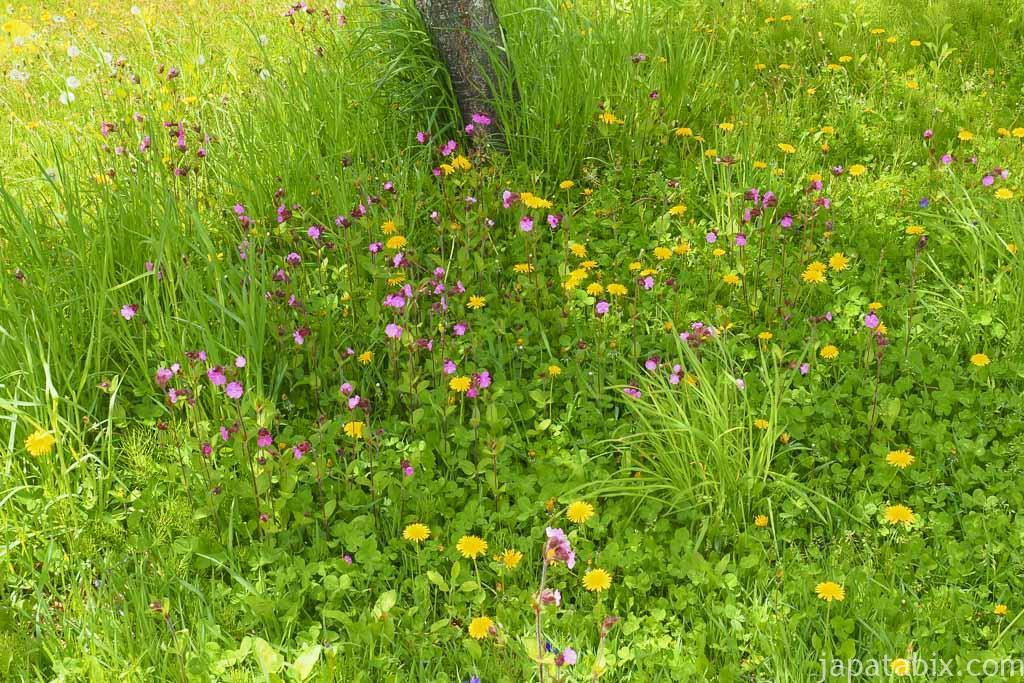 新城仙台山の三本ナラ 近くに咲く花