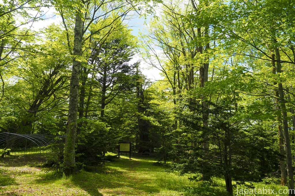 北海道 巨木 芦別 黄金水松近くの森