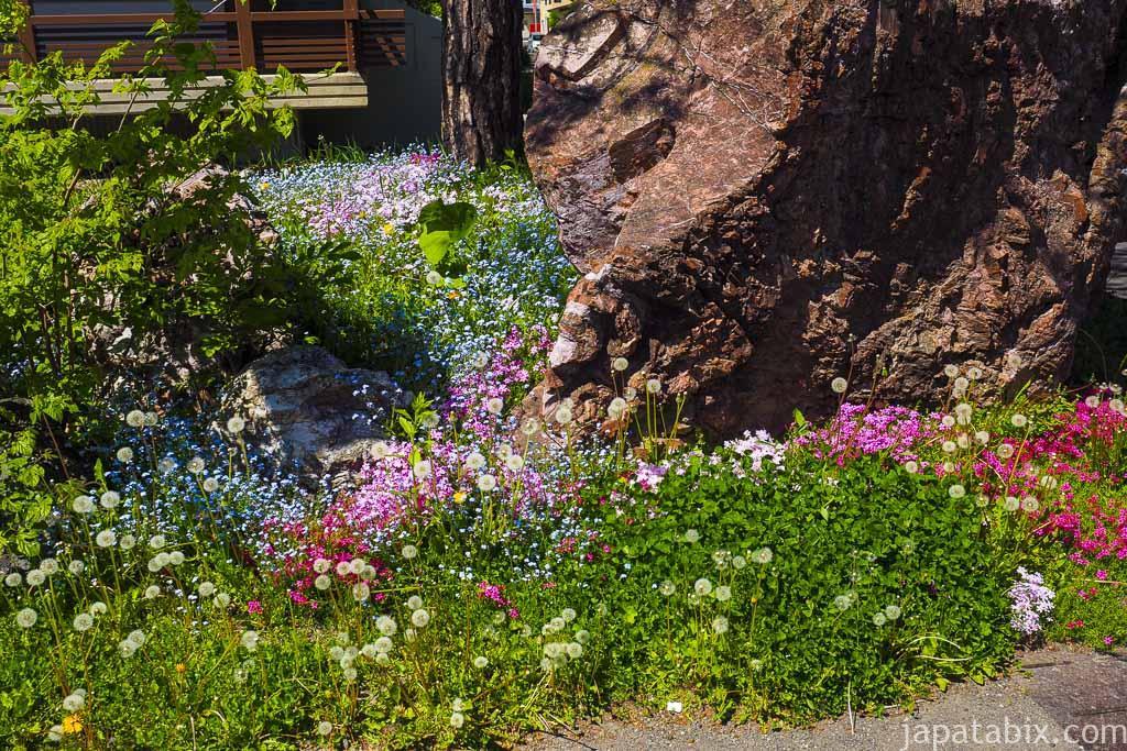 旭川神社 境内に咲く花