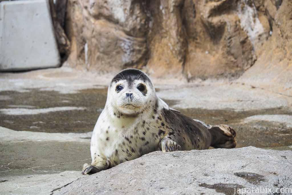 旭山動物園 あざらし館 赤ちゃんあざらし