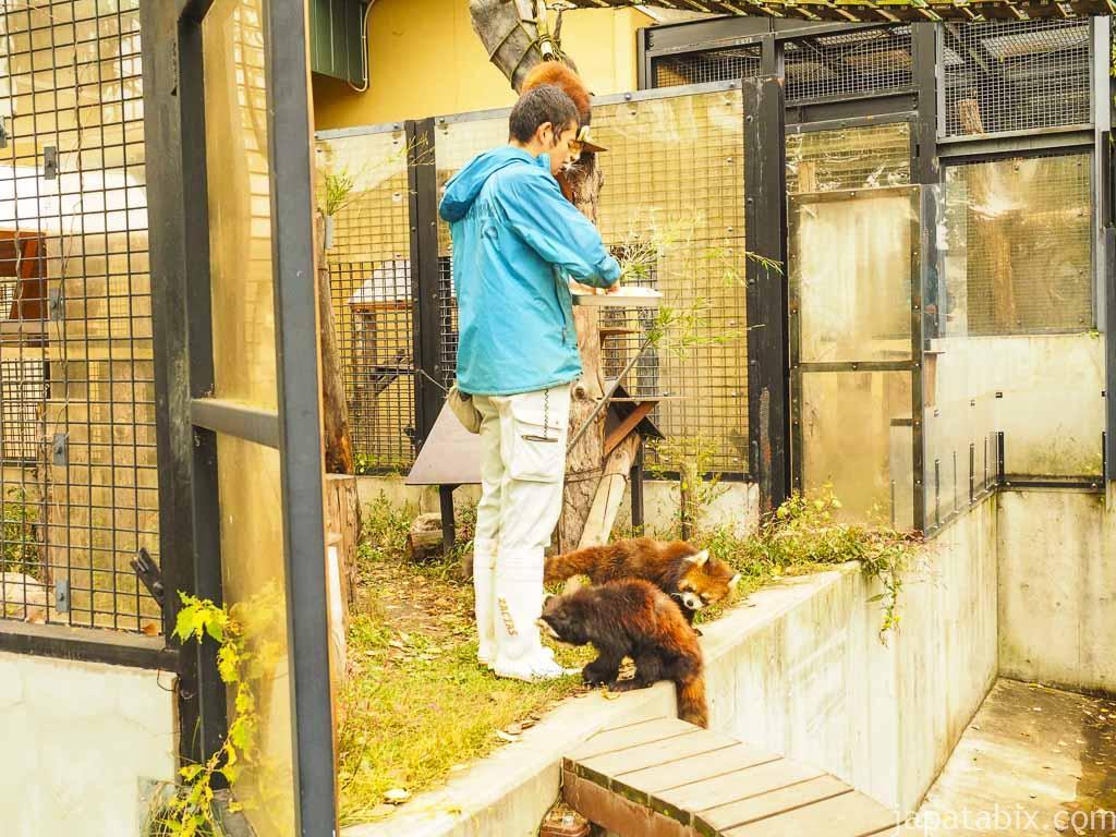 旭山動物園 レッサーパンダ舎