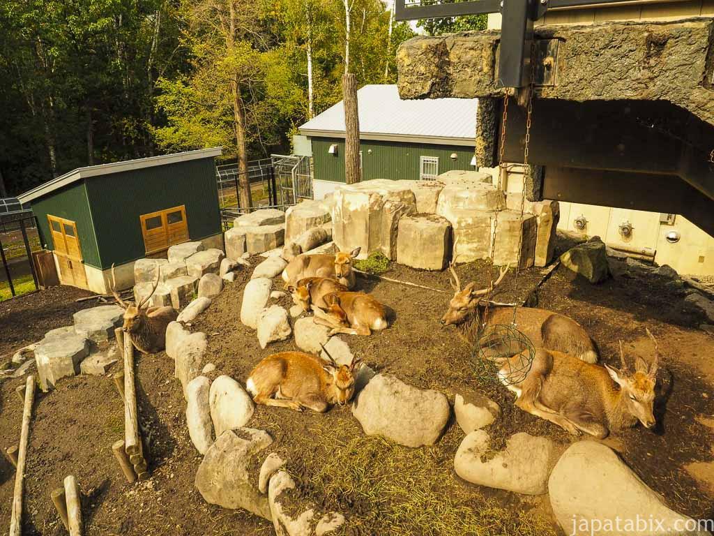 旭山動物園 エゾシカの森