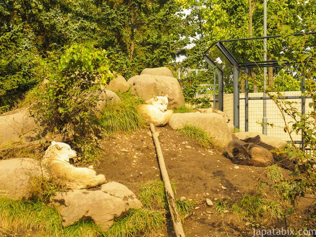 旭山動物園 オオカミの森