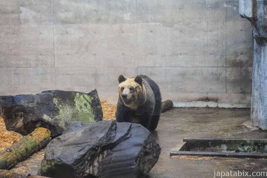 旭山動物園 エゾヒグマ