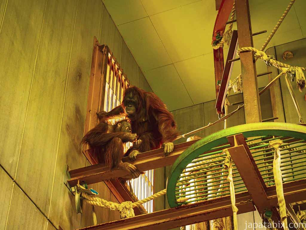 旭山動物園 おらんうーたん舎