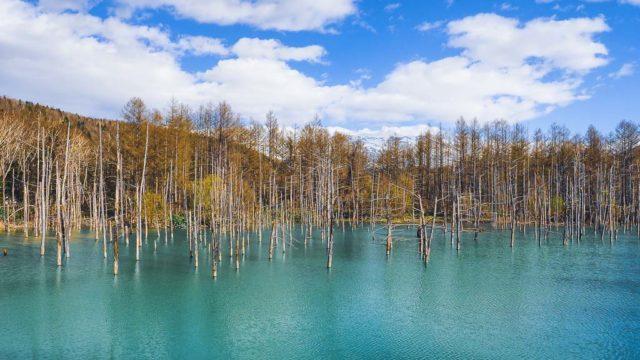 北海道 美瑛町 青い池と青空