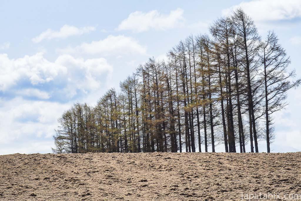 北海道 美瑛町 5月のマイルドセブンの丘