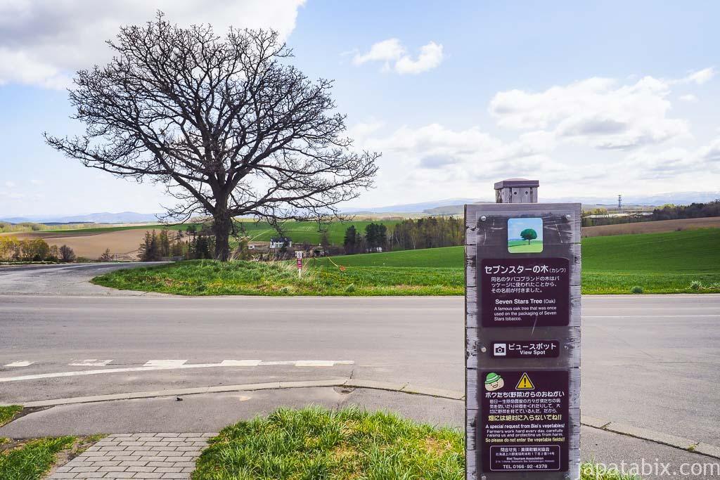北海道 美瑛町 5月のセブンスターの木