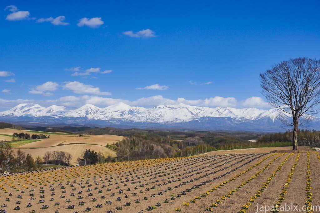 北海道 美瑛町 春の四季彩の丘