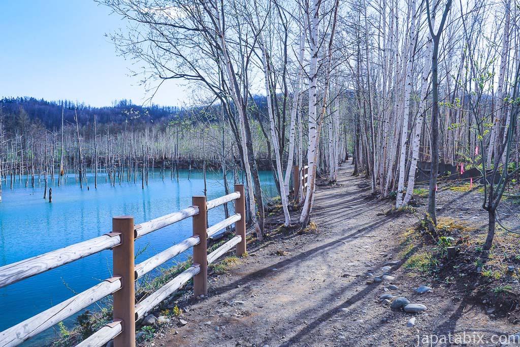 北海道 美瑛町 青い池 通路