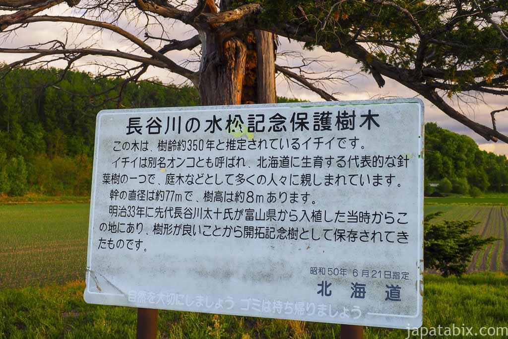 北海道 中富良野町 長谷川の水松