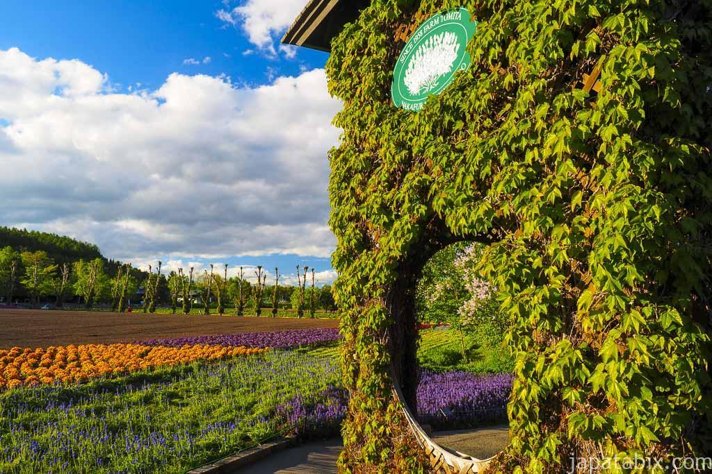 北海道 ファーム富田 5月の風景