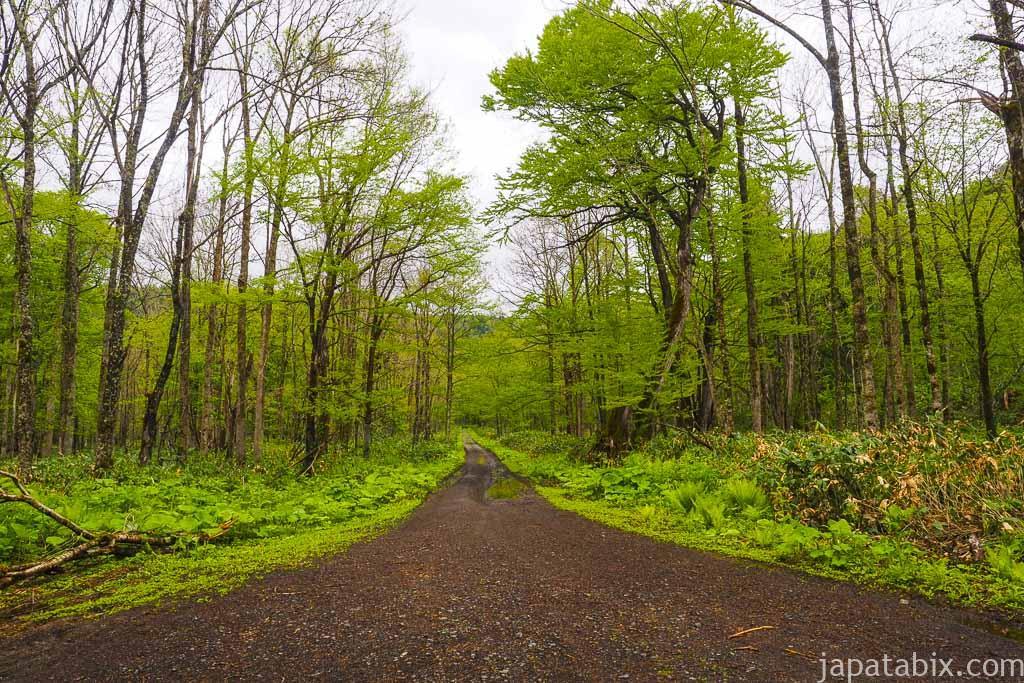 北海道 美瑛町 巨木 森の神様までの道のり