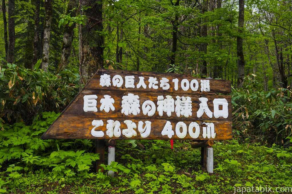 北海道 美瑛町 巨木 森の神様の看板