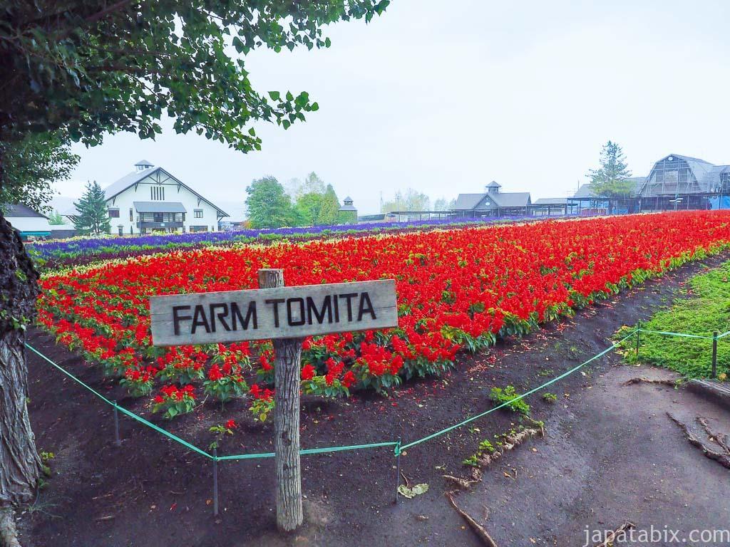 北海道 ファーム富田 10月の風景