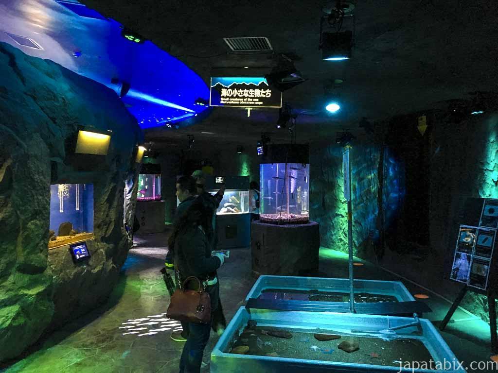 海底階 ミニ水族館 タッチプール