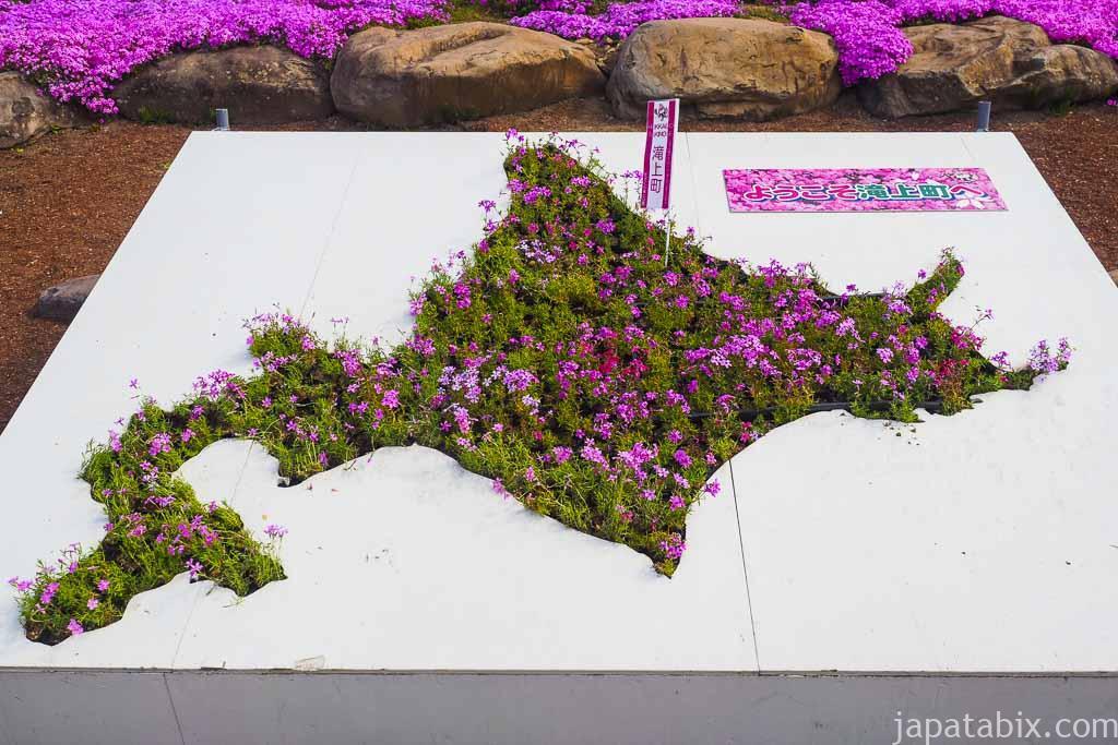北海道の形をした芝ざくら