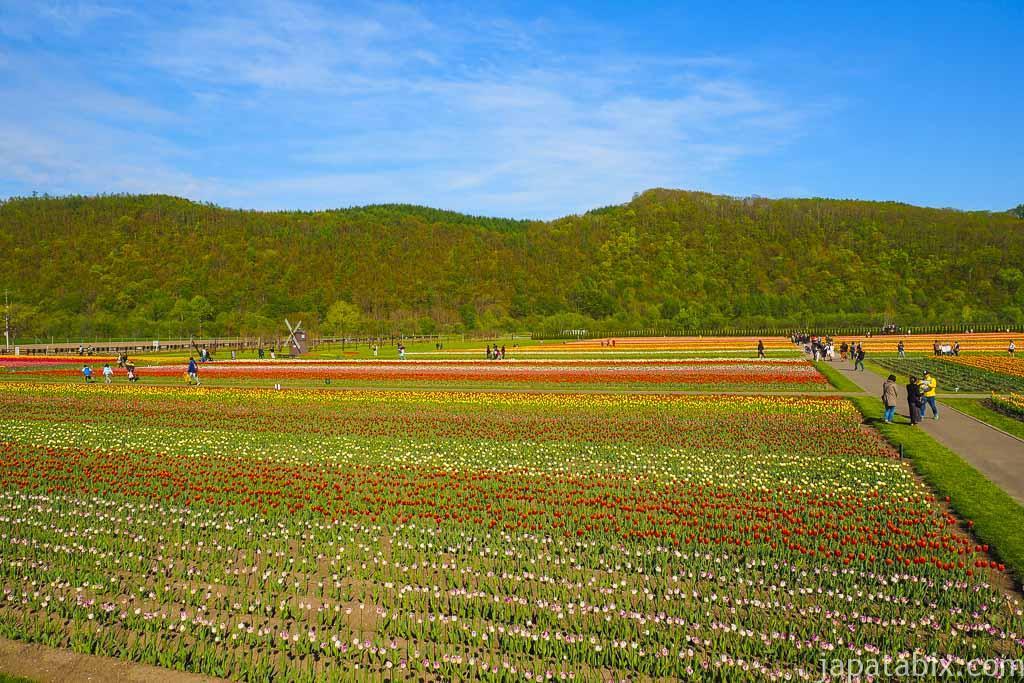 青空とチューリップ畑