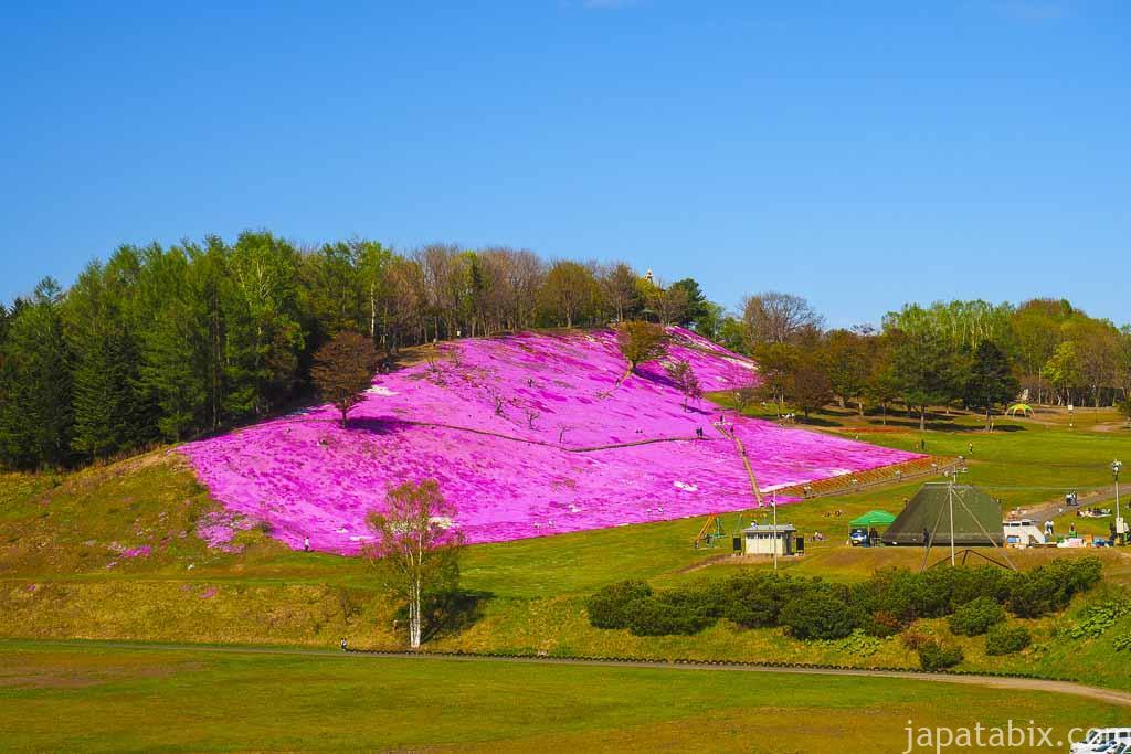 北海道遠軽町 太陽の丘えんがる公園 のシバザクラを離れて観たところ