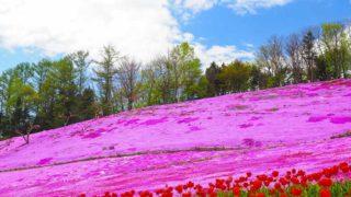 遠軽町 太陽の丘えんがる公園 芝ざくらとチューリップ