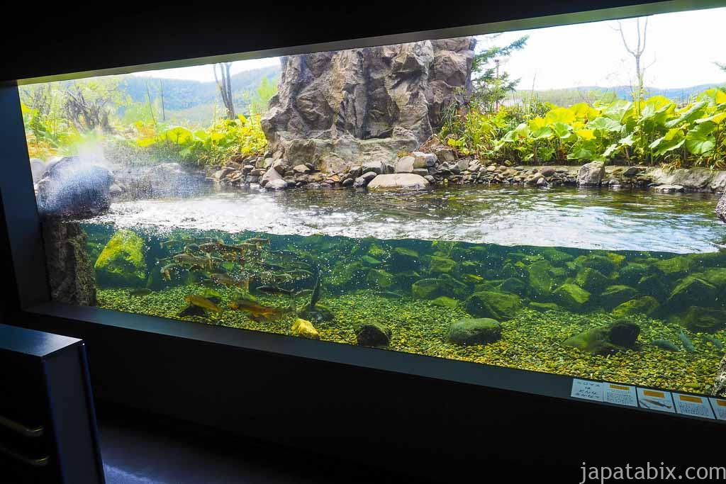 北の大地の水族館 世界初 冬に凍る水族館