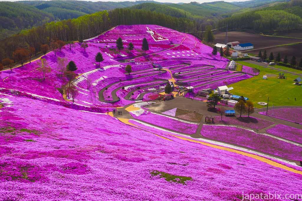 ひがしもこと芝桜公園 一面満開のシバザクラ