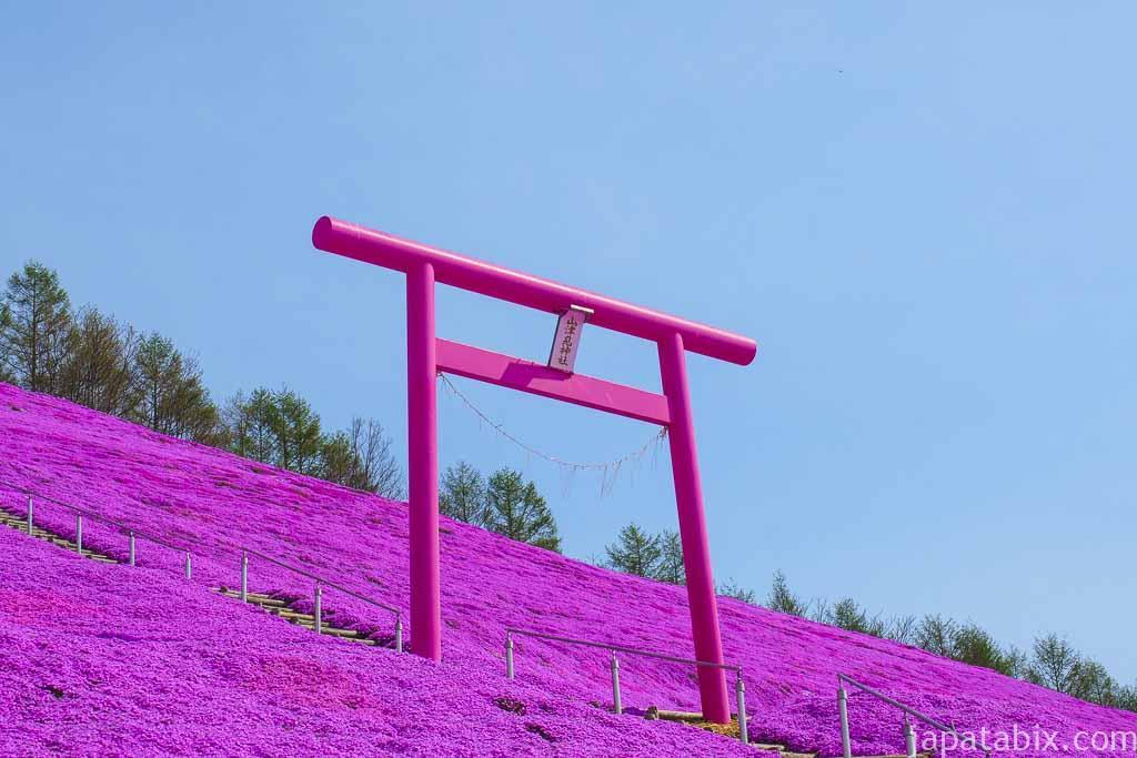 ひがしもこと芝桜公園 山津見神社のピンク色の鳥居