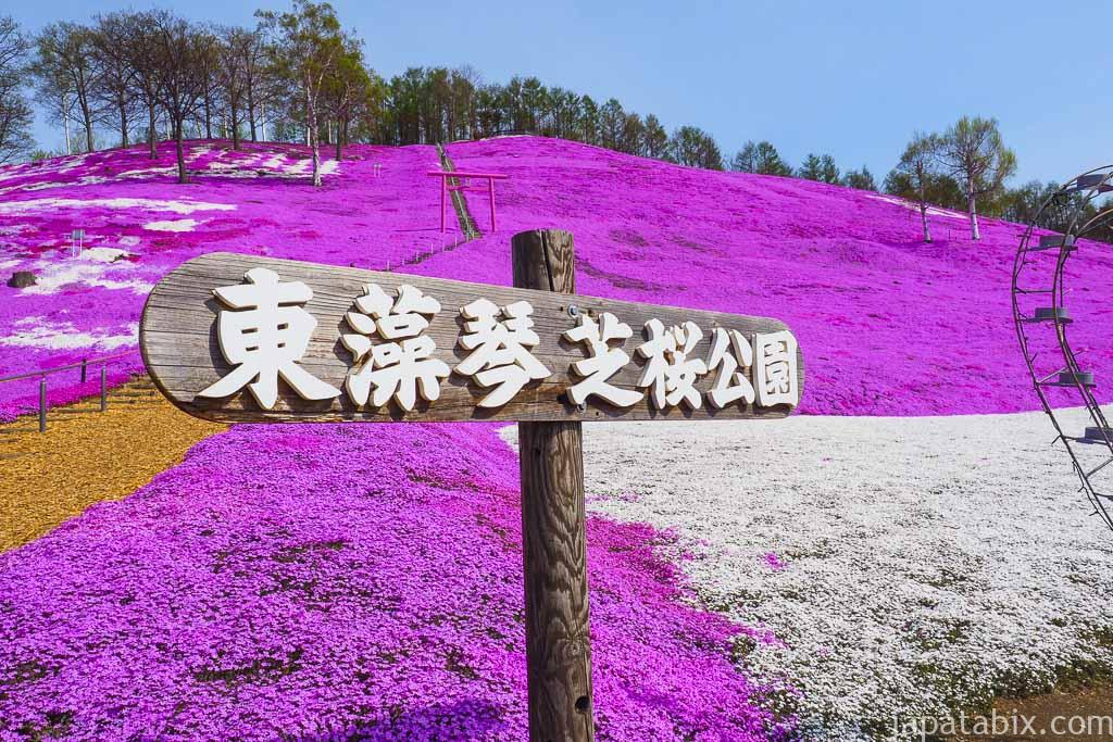 北海道大空町東藻琴 ひがしもこと芝桜公園 見ごろのシバザクラ