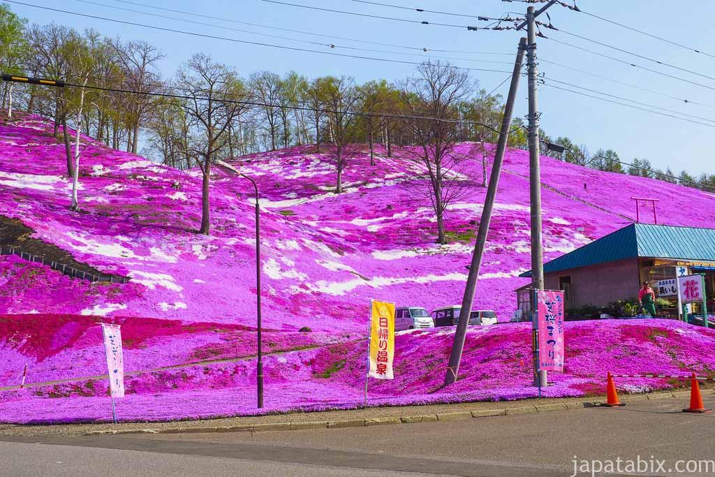 北海道大空町東藻琴 ひがしもこと芝桜公園