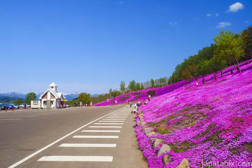 北海道滝上町 芝ざくら滝上公園 駐車場前の斜面