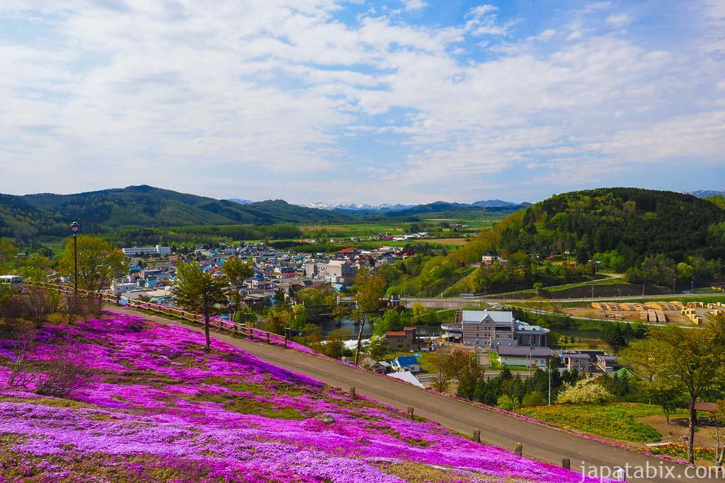 北海道滝上町 芝ざくら滝上公園 まばらなエリア