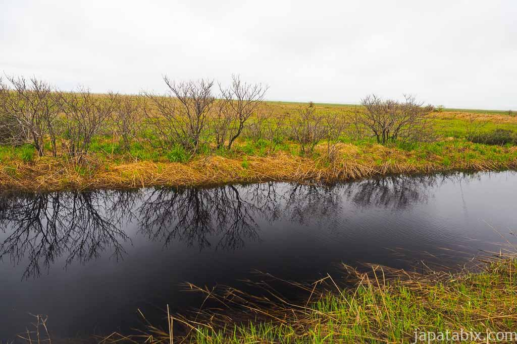 豊富町 サロベツ湿原