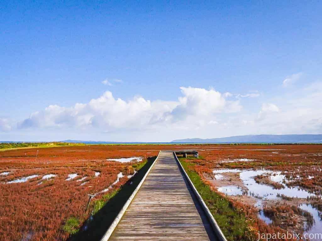 北海道網走市 能取湖のサンゴ草の紅葉