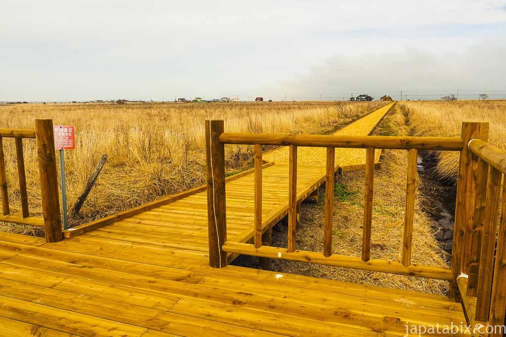 霧多布湿原ナショナルトラスト 琵琶瀬木道テラス