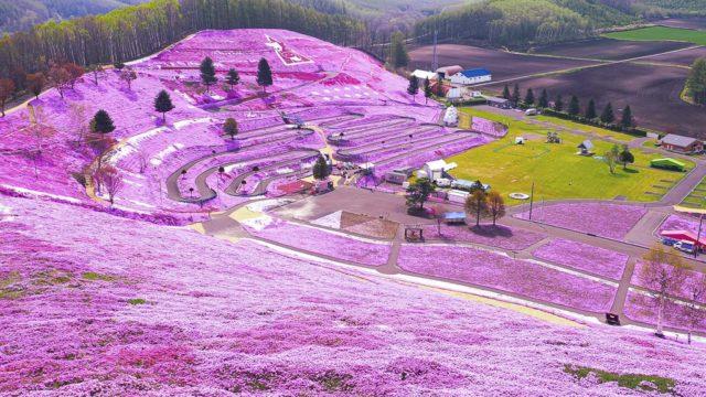 ひがしもこと芝桜公園 展望台からの眺め