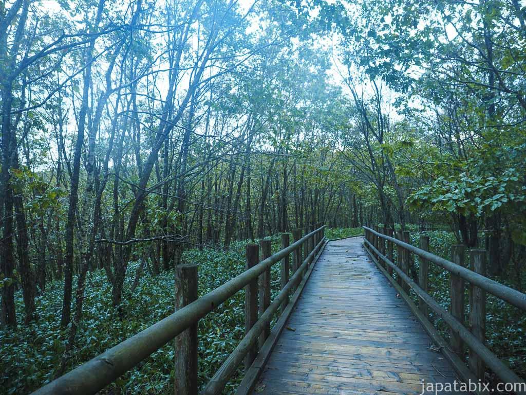 早朝の湿原展望遊歩道