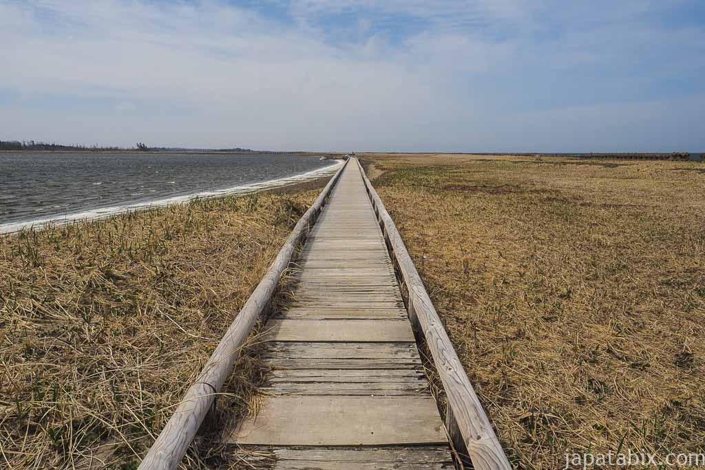 春国岱への木道