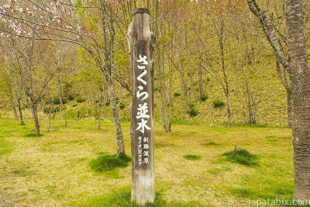 別保公園 さくら並木