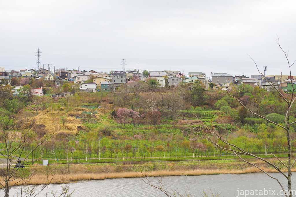 春採公園 ヤマザクラ