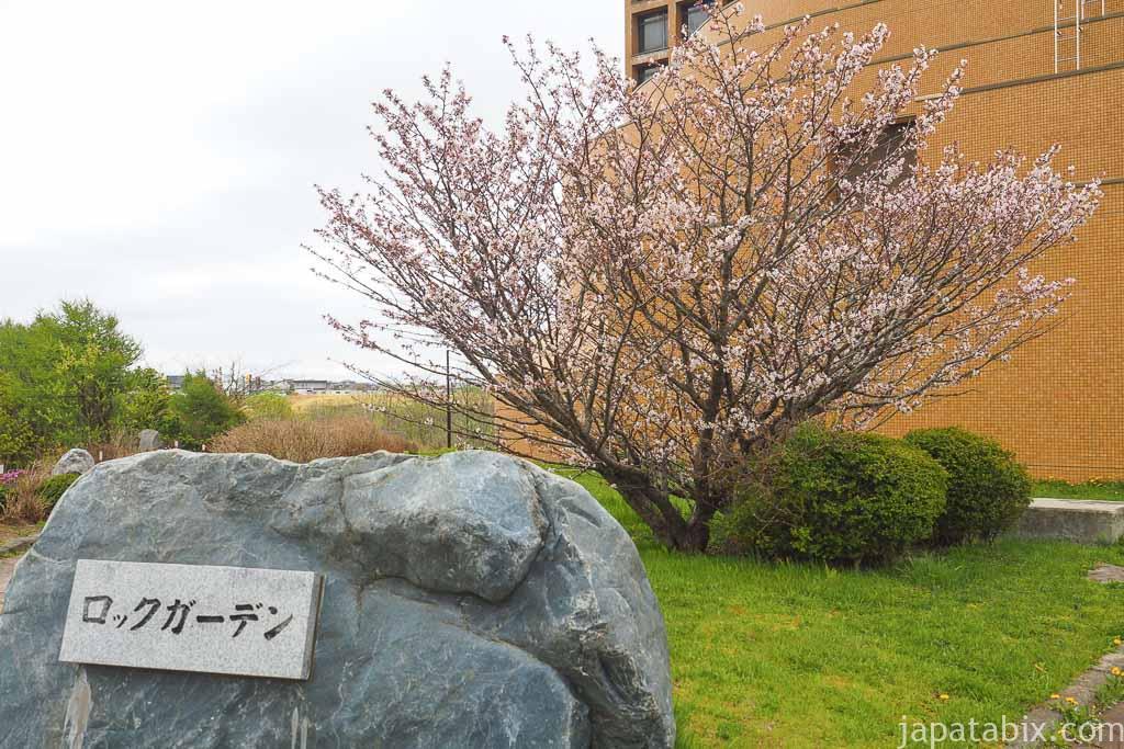 春採公園 ロックガーデン ヤマザクラ