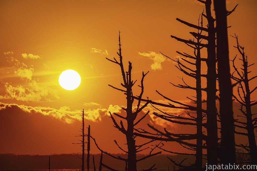 トドワラの夕焼け