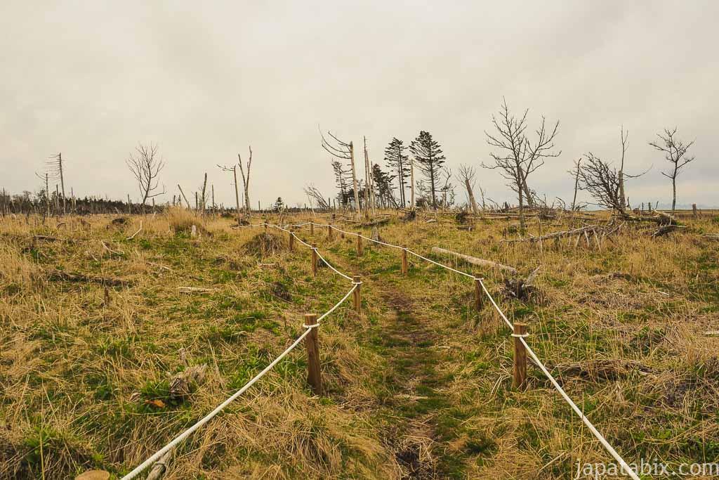 春国岱 自然観察路「ふるさとの道」