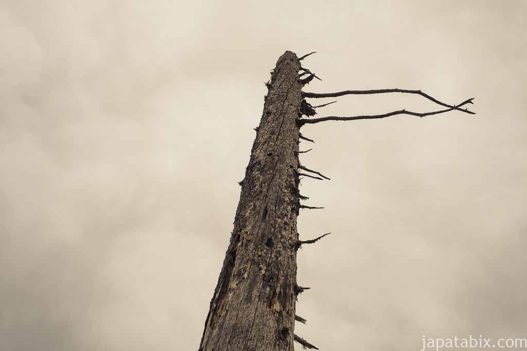 春国岱の枯れ木