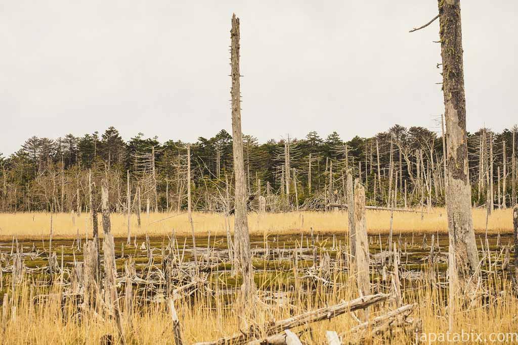 春国岱の枯れ木の景色
