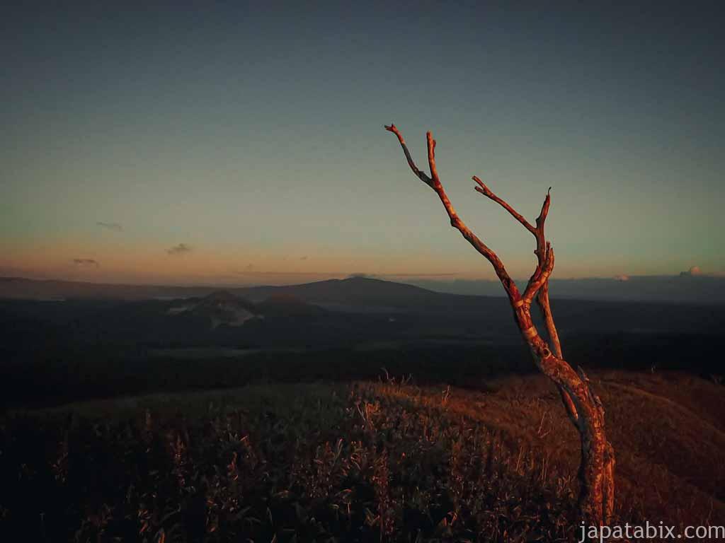 摩周湖の枯れ木