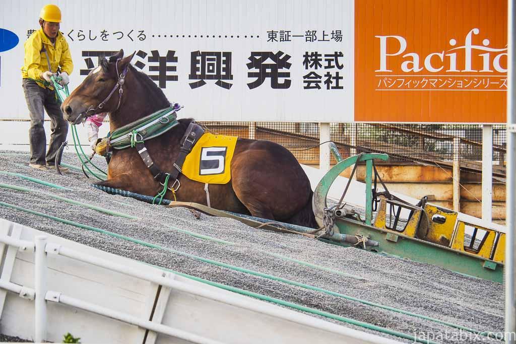 帯広競馬場 ばんえい十勝 レース開催 第2障害で諦めたばん馬