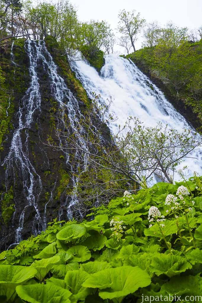 5月のオシンコシンの滝