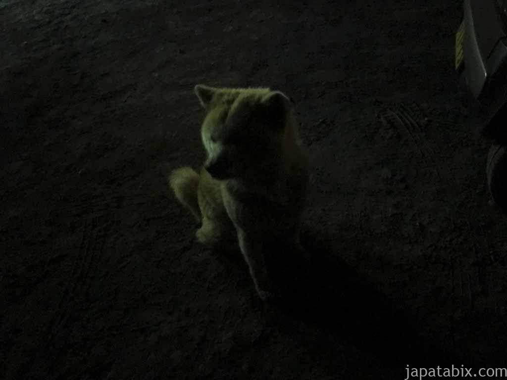 オソウシ温泉 鹿乃湯荘 温泉犬ケンちゃん